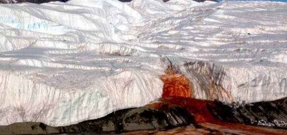 """Antartide: """"Cascate di sangue"""", risolto il mistero - Repubblica.it - repubblica.it"""