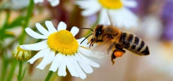 Estos insectos son los únicos capaces de proporcionar alimentos a los seres humanos