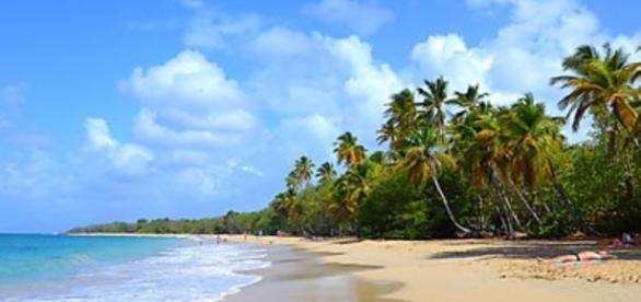 Paysage de Martinique : je t'aime beaucoup