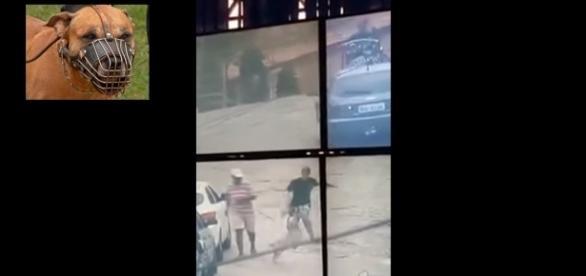 Suspeito fugiu da polícia, mas foi 'enquadrado' por pitbull