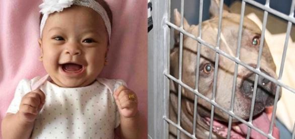 Criança de 6 meses foi morta por cachorro pitbull