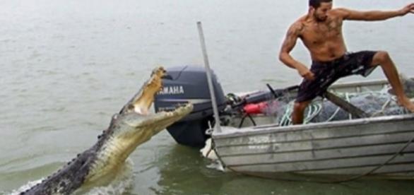Homem é devorado por crocodilos
