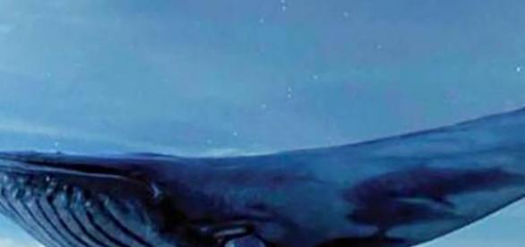 Blue Whale: il gioco della morte