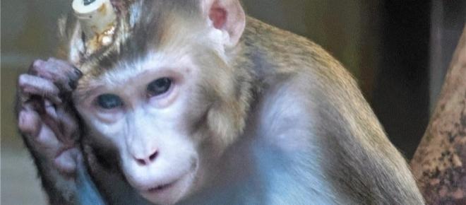 Tierschutz: Grauenhaftes Video von PETA über Affenversuche