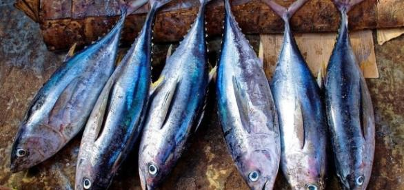 Intossicazione da tonno, 40 casi negli ultimi giorni: scatta l ... - quotidianodipuglia.it