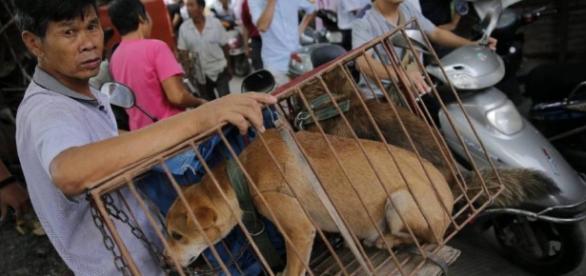 Taiwán prohíbe el consumo de carne de perro y gato | Blog Mundo ... - elpais.com