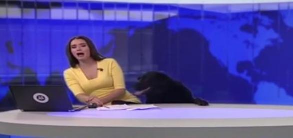 Cachorro invade telejornal e assusta âncora (Foto: Reprodução)