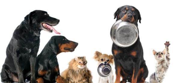 Cuánto debe comer mi perro - 10 pasos (con imágenes) - uncomo.com
