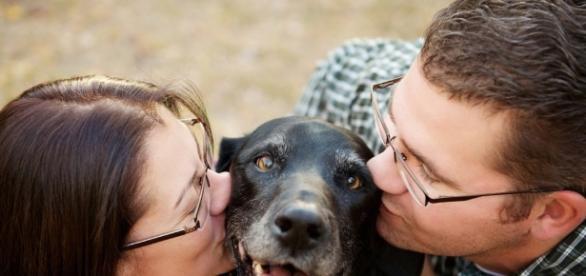 Reencuentros de perros con sus amos.