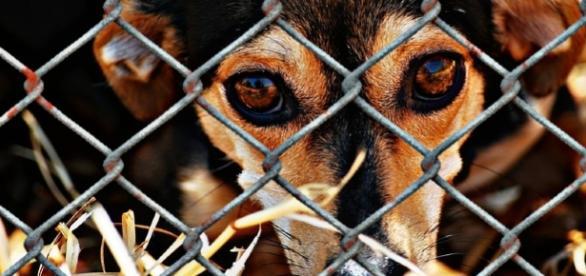 Adopt or buy a pet? Photo animal shelter via CCO Public domain via Pixabay