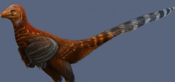 Nope. It's not a chicken but a type of dinosaur! Photo via gizmodo.com