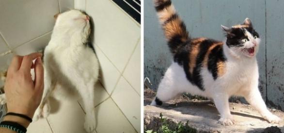 Gatos: os animais mais dramáticos do mundo. Fotos: Reprodução/Bored Panda