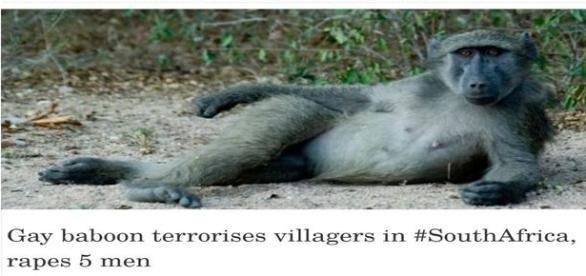 Será mesmo que um macaco estuprou seis pessoas?