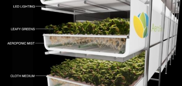 Blog - agupieware.com vertical farm