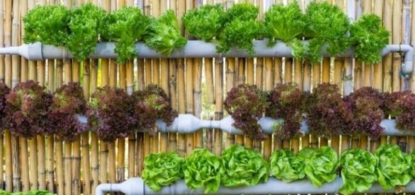 No es necesario un gran espacio para empezar a cultivar algunas hortalizas