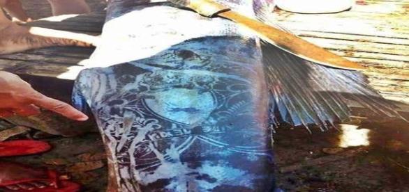 Alegado peixe tatuado impressionou conspirólogos (FILIPINO BUZZ)