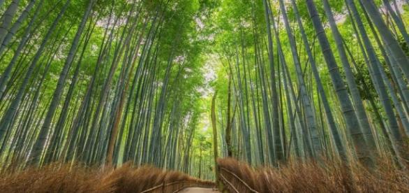 O bambu pode ter muitas utilidades na construção civil