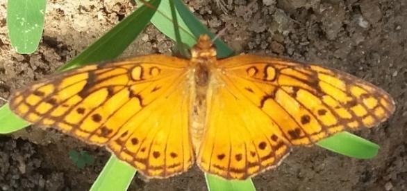Se a borboleta se autocriticasse, enquanto larva, jamais teria impulso para sua completa metamorfose