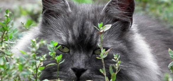 I gatti hanno 9000 anni. Lo dice il dna