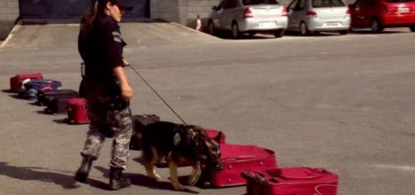 Cães treinados encontram droga