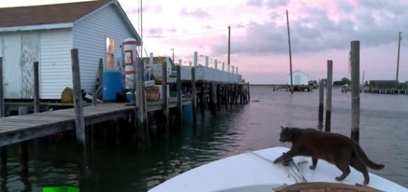 Tangier Island - Image via YouTube Screencap/ RT Documentary