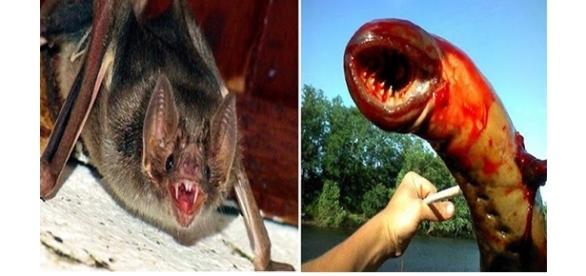 Animais que se alimentam de sangue