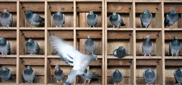 Flying away from our social pigeonholes