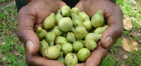 Kakadu Plum: The New Superfood Ingredient in Skincare - beverlyhillsmd.com