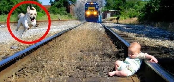 Muitas vezes os animais se tornam verdadeiros heróis. ( Foto: Reprodução)