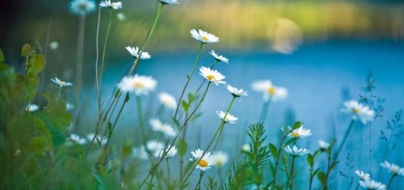 16 plantes sauvages comestibles : guide pratique - consoglobe.com