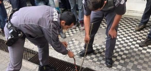 Serpente venenosa foi resgatada na manhã desta quarta-feira (21), no interior de SP (foto: Divulgação / PMSP)