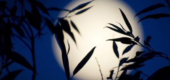 Il 9 luglio l'apice della Luna dell'Opulenza
