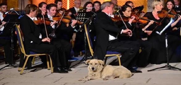 Cãozinho vira-lata 'invade' concerto musical na Turquia
