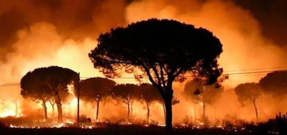 Las llamas devoran la vida en Doñana