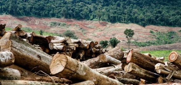 Noruega pode suspender repasses do Fundo Amazônia