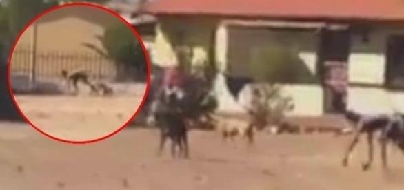 Internautas ficaram abismados com aparição de 'homem cachorro' (Youtube)