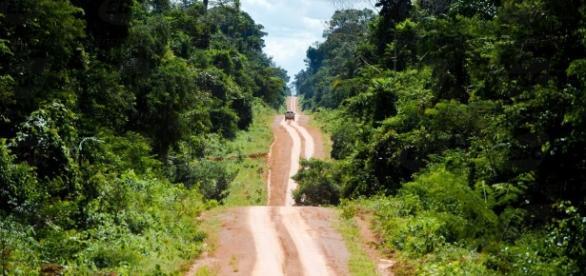 O desmatamento é uma ameça real de destruição da Floresta Amazônica