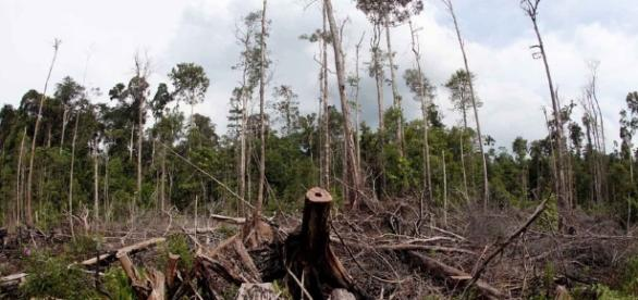 Say No To Palm Oil | What's The Issue - saynotopalmoil.com