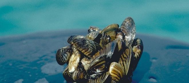 Should We Be Eating Invasive Species?