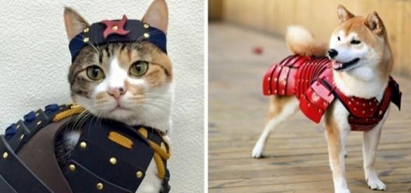 Que tal vestir seu pet como um guerreiro samurai? (Foto: Reprodução/Samurai Age)