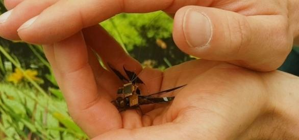 Scientists have created a cyborg dragonfly that can be used as a tiny drone. Photograph courtesy of: Draper