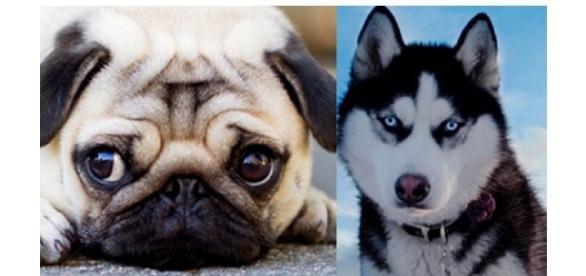 De acordo com seu signo, qual é o cão ideal para você ter?