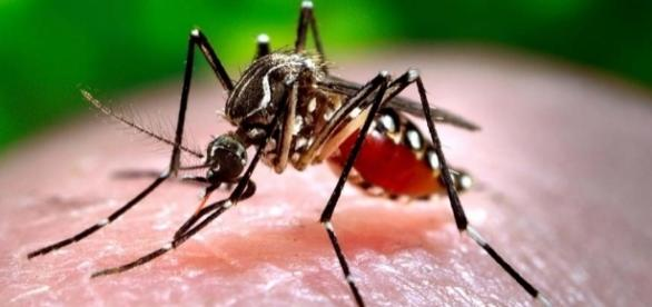 Nuevo aparato capaz de aliviar las picaduras de mosquitos - lainformacion.com