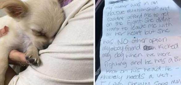 Uma linda atitude que salvou esse animalzinho ( Foto - Facebook)