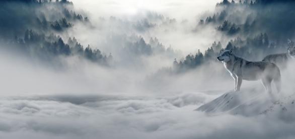 Free photo: Wolf, Wolves, Snow Wolf, Landscape - Free Image on ... - pixabay.com