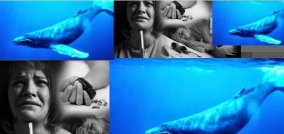 Baleia Azul tem nova etapa no Brasil (Foto: Reprodução/ Montagem)