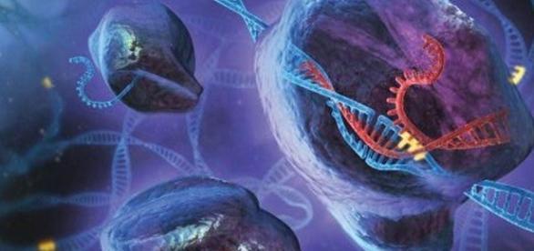 Dupla hélice de DNA humano poderá sofrer edições (Foto: Reprodução)