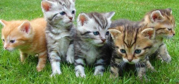 Adorable kittens -- Image via Pixabay