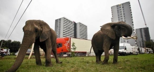 Dwa słonie, a pomiędzy nimi wielkie, niespełnione chciejstwo; świat popatrzy sobie z okien (foto: wyborcza.pl)
