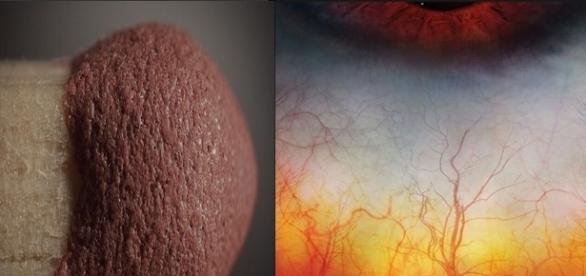 veja as curiosidades desses imagens com super zoom